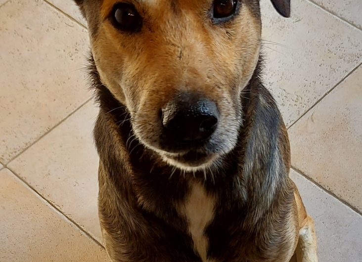 Max à l'adoption